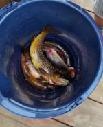 001_fiskfangst